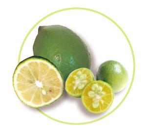 金桔/檸檬